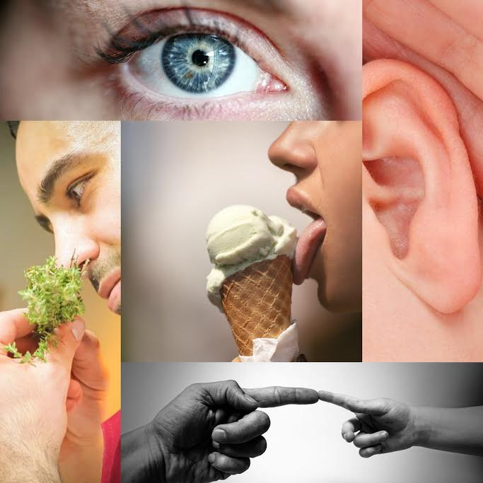 Mindfulness and the 5 Senses